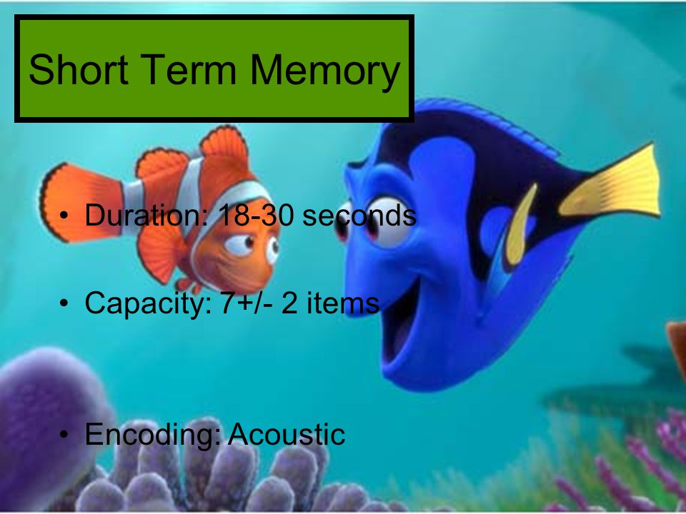 Short Term Memory Duration: 18-30 seconds Capacity: 7+/- 2 items Encoding: Acoustic