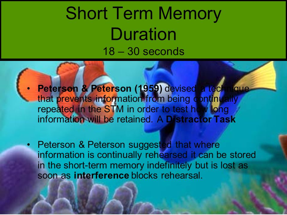 Short Term Memory Duration 18 – 30 seconds Peterson & Peterson (1959) devised a technique that prevents information from being continually repeated in the STM in order to test how long information will be retained.