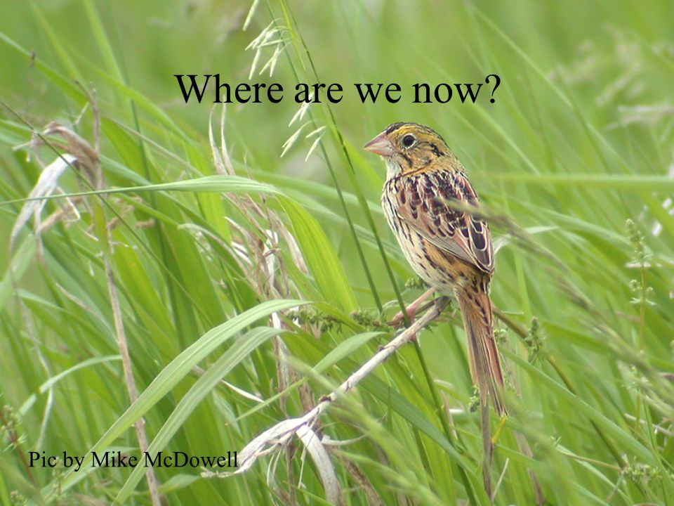 Where are we now Pic by Mike McDowell