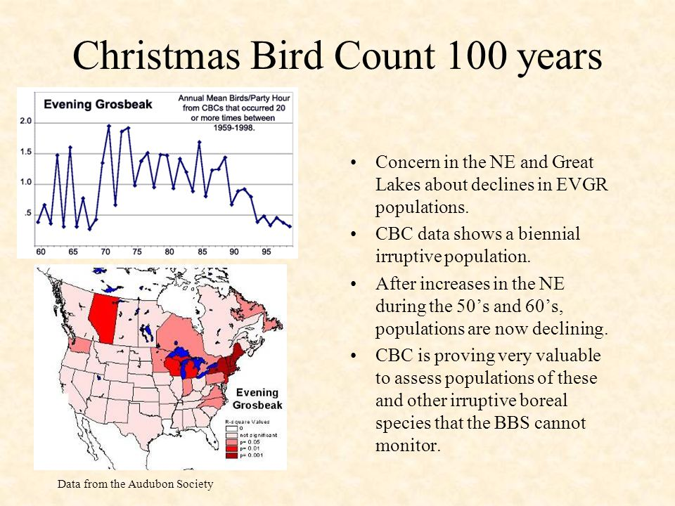 Christmas Bird Count 100 years Concern in the NE and Great Lakes about declines in EVGR populations.