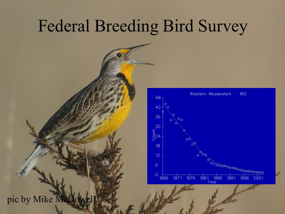 Federal Breeding Bird Survey pic by Mike McDowell