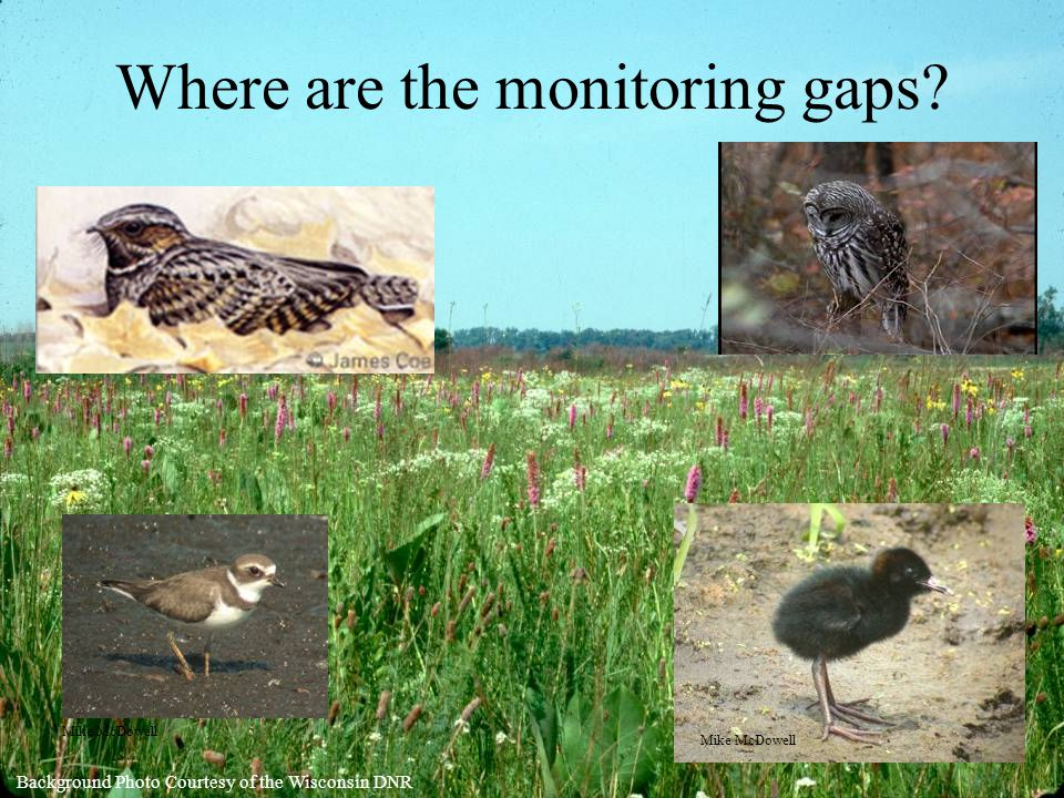 Where are the monitoring gaps Mike McDowell Background Photo Courtesy of the Wisconsin DNR