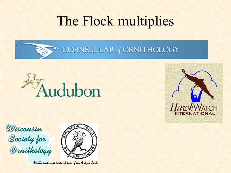 The Flock multiplies