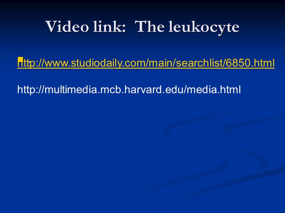 Video link: The leukocyte.