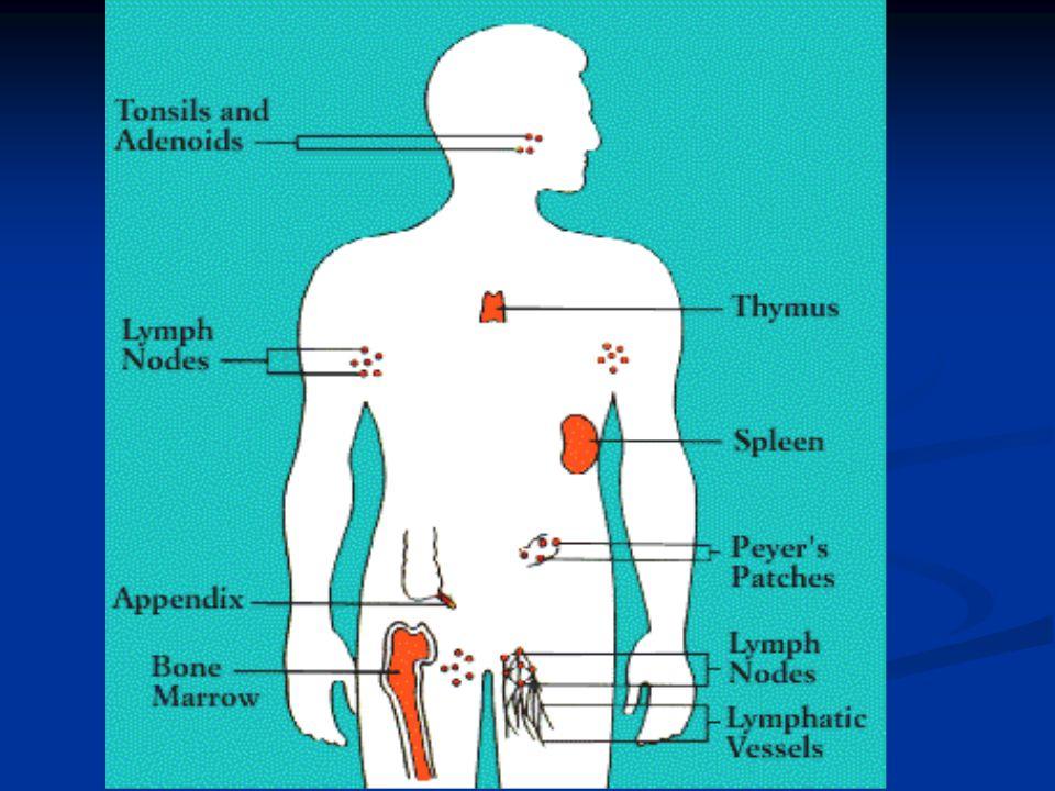 Immune –Endocrine Link IL-6 increase associates with low cortisol, CRH mediated Papanicolau Neuroimmunomodulation 2004 11(2)65-74 Maes M Neuro Endocrinol Lett 2005 Oct 30;26(5)