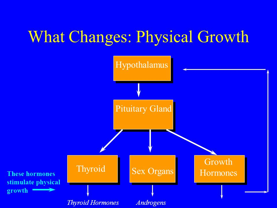 Changes in Muscle and Fat Before puberty, boys = girls on levels of muscle and fat Both boys and girls develop muscle and increase fat during puberty Muscle grows faster in boys, fat increases faster in girls End of puberty muscle/fat ratio: 3:1 for boys, 5:4 for girls