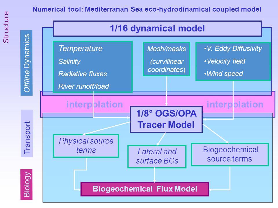 interpolation interpolation 1/8° OGS/OPA Tracer Model V.