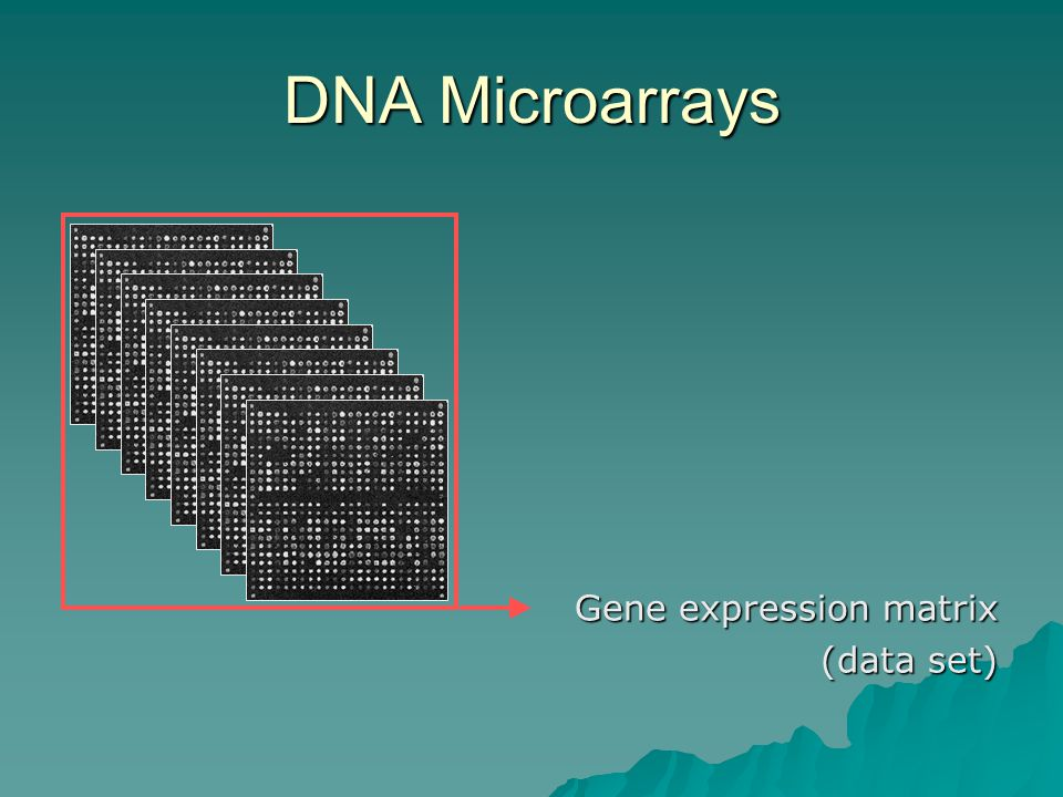 DNA Microarrays Gene expression matrix (data set)