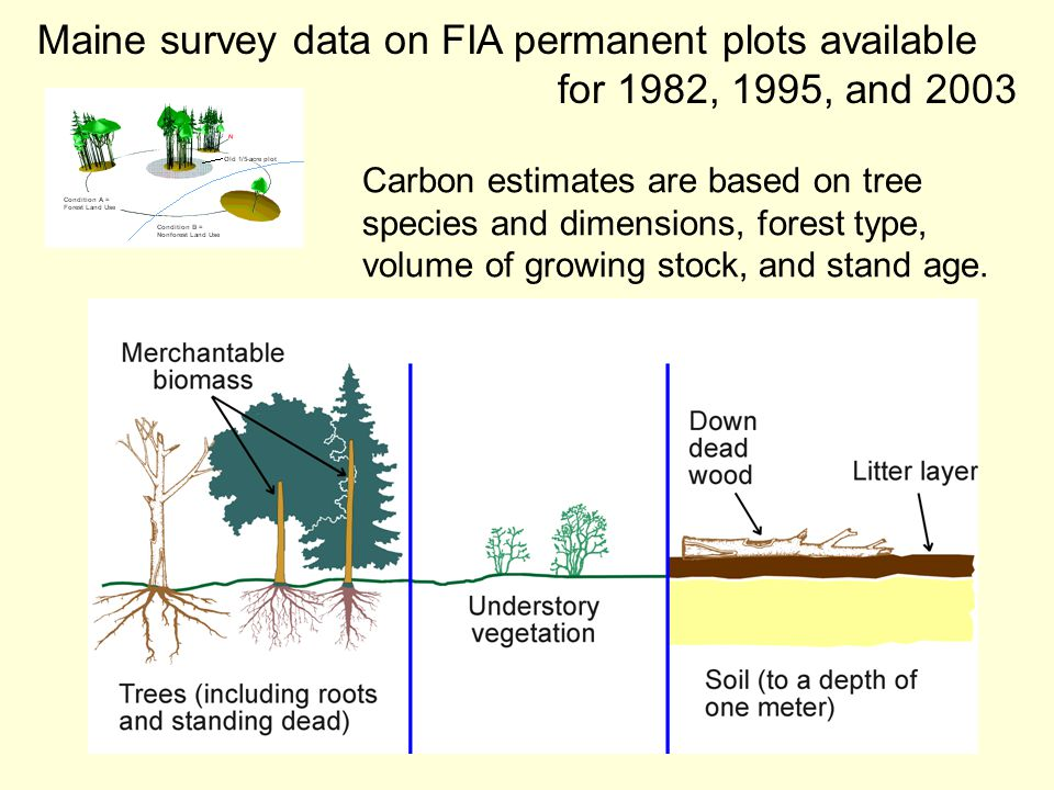 3/22/05TDP/JES/JDK12 Maine survey data on FIA permanent plots available for 1982, 1995, and 2003 Carbon estimates are based on tree species and dimensions, forest type, volume of growing stock, and stand age.