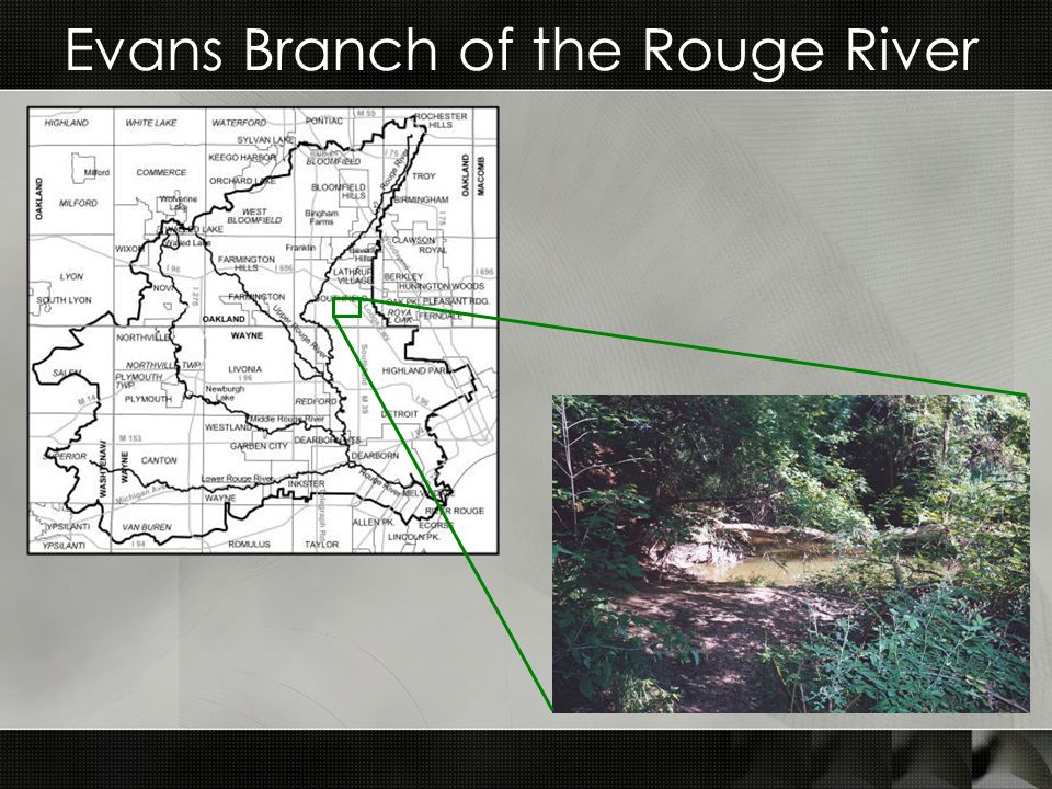 Evans Branch of the Rouge River