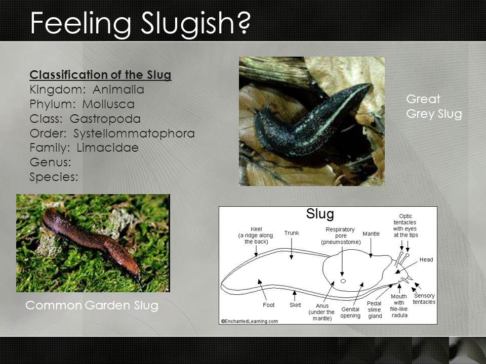 Feeling Slugish.