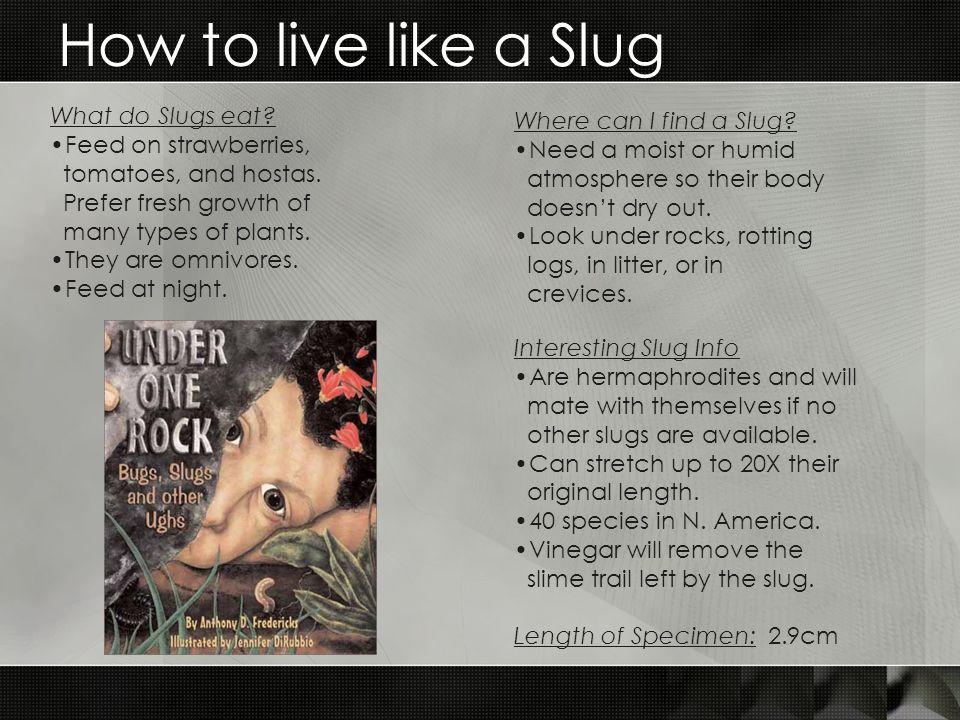 How to live like a Slug What do Slugs eat.Feed on strawberries, tomatoes, and hostas.
