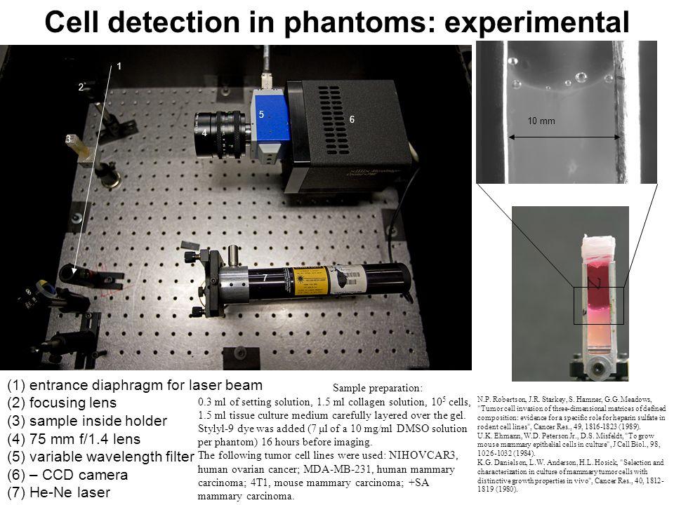 Cell detection in phantoms: experimental 6 3 2 7 4 5 1 (1) entrance diaphragm for laser beam (2) focusing lens (3) sample inside holder (4) 75 mm f/1.4 lens (5) variable wavelength filter (6) – CCD camera (7) He-Ne laser 10 mm Sample preparation: 0.3 ml of setting solution, 1.5 ml collagen solution, 10 5 cells, 1.5 ml tissue culture medium carefully layered over the gel.