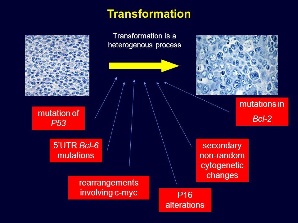 Transformation is a heterogenous process mutation of P53 P16 alterations rearrangements involving c-myc secondary non-random cytogenetic changes 5'UTR Bcl-6 mutations mutations in Bcl-2 Transformation