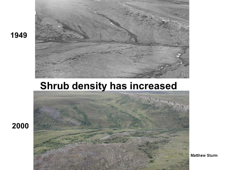 Vegetation change warms the local climate