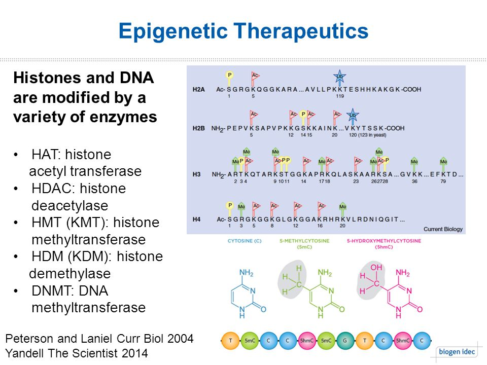5. Epigenetic Therapeutics Histones and DNA are modified by a variety of enzymes HAT: histone acetyl transferase HDAC: histone deacetylase HMT (KMT):
