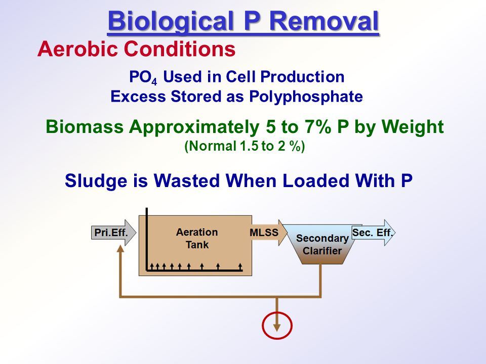 Sludge is Wasted When Loaded With P Biological P Removal Aerobic Conditions PO 4 Used in Cell Production Excess Stored as Polyphosphate Biomass Approximately 5 to 7% P by Weight (Normal 1.5 to 2 %)