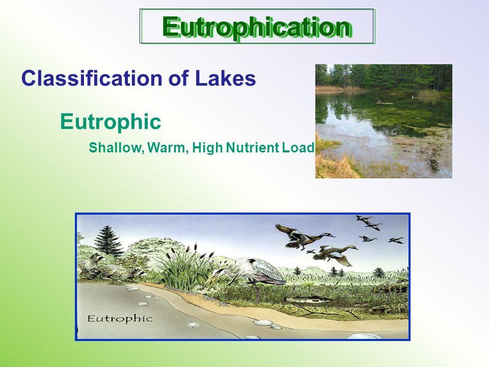 EutrophicationEutrophication Classification of Lakes Eutrophic Shallow, Warm, High Nutrient Load