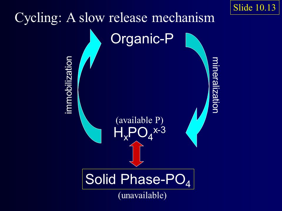 Organic-P Slide 10.13 (available P) Cycling: A slow release mechanism H x PO 4 x-3 mineralization immobilization Solid Phase-PO 4 (unavailable)