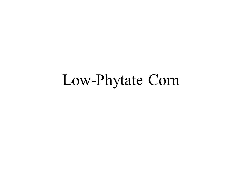Low-Phytate Corn