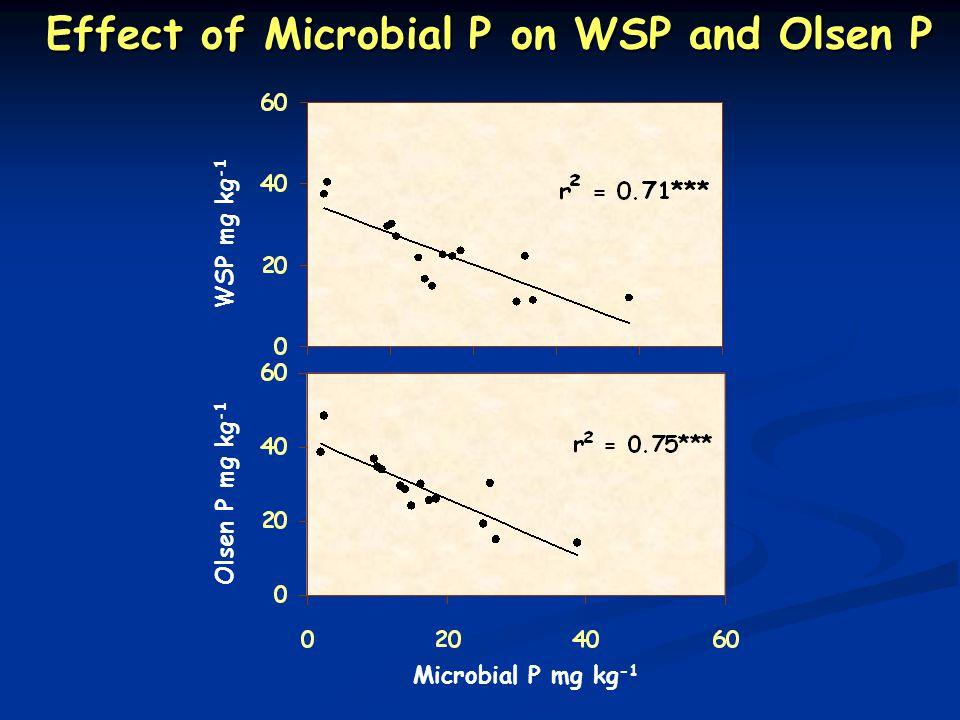 Microbial P mg kg -1 Olsen P mg kg -1 WSP mg kg -1 Effect of Microbial P on WSP and Olsen P Effect of Microbial P on WSP and Olsen P
