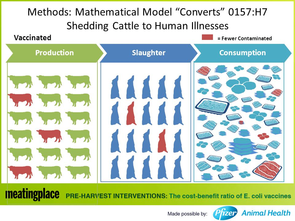 Vaccinated Methods: Mathematical Model Converts 0157:H7 Shedding Cattle to Human Illnesses ProductionSlaughterConsumption = Fewer Contaminated