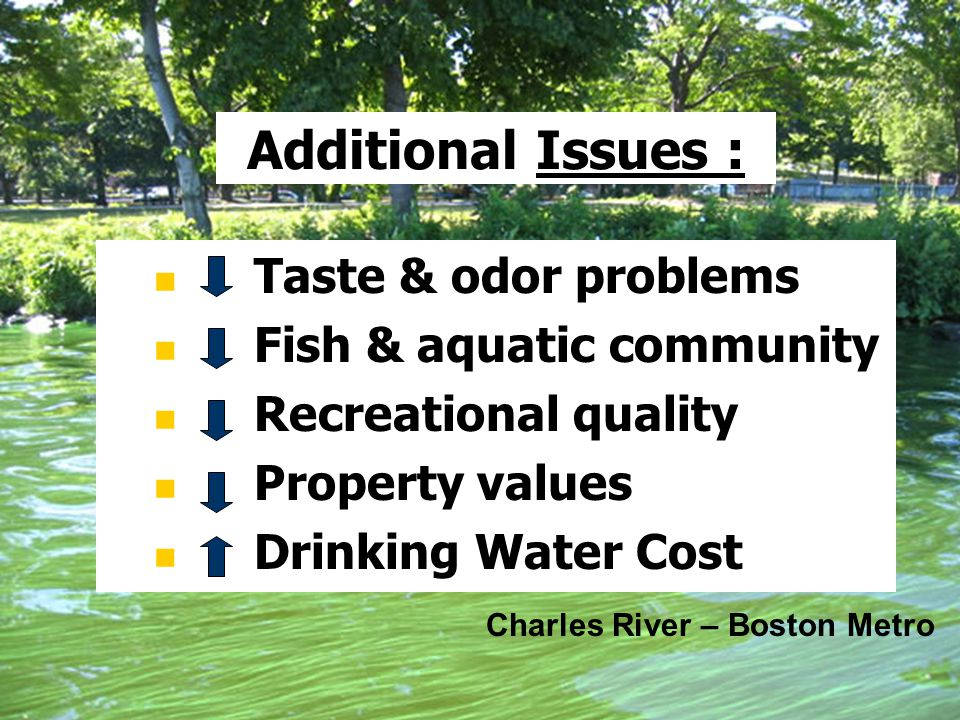 Additional Issues : Taste & odor problems Fish & aquatic community Recreational quality Property values Drinking Water Cost Charles River – Boston Met