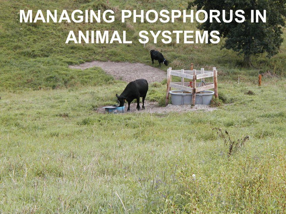 MANAGING PHOSPHORUS IN ANIMAL SYSTEMS