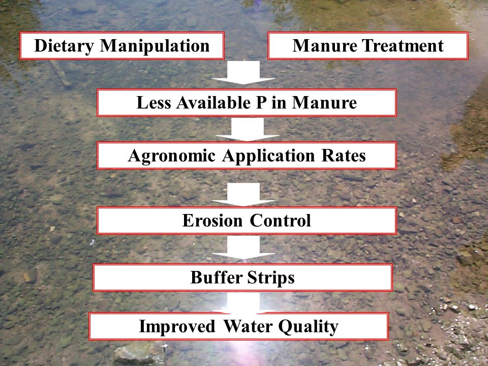 Dietary ManipulationManure Treatment Less Available P in Manure Agronomic Application Rates Erosion Control Buffer Strips Improved Water Quality