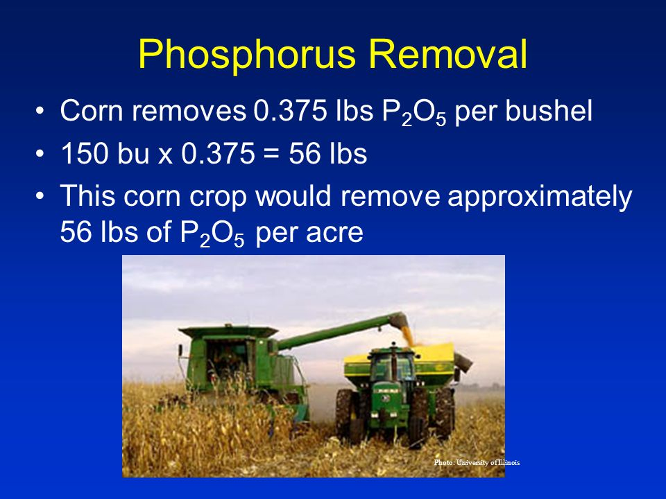 Phosphorus Removal Corn removes 0.375 lbs P 2 O 5 per bushel 150 bu x 0.375 = 56 lbs This corn crop would remove approximately 56 lbs of P 2 O 5 per acre Photo: University of Illinois