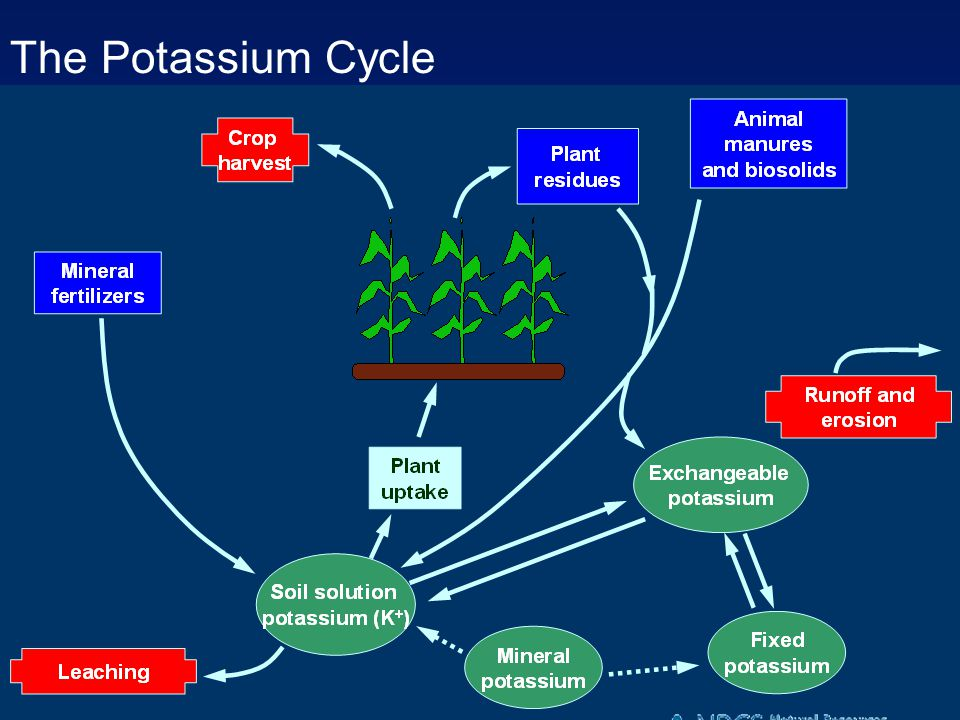 The Potassium Cycle