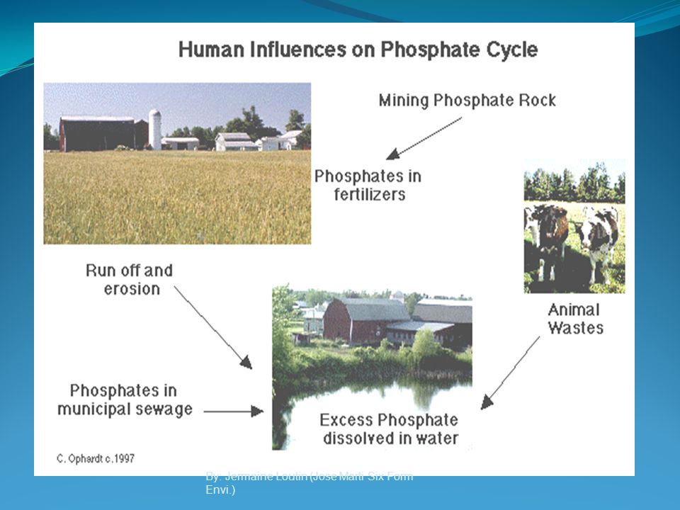 A GLOBAL VIEW OF THE PHOSPHORUS CYCLE The phosphorus cycle occurs when phosphorus moves from land to sediments in the seas and then back to land again.