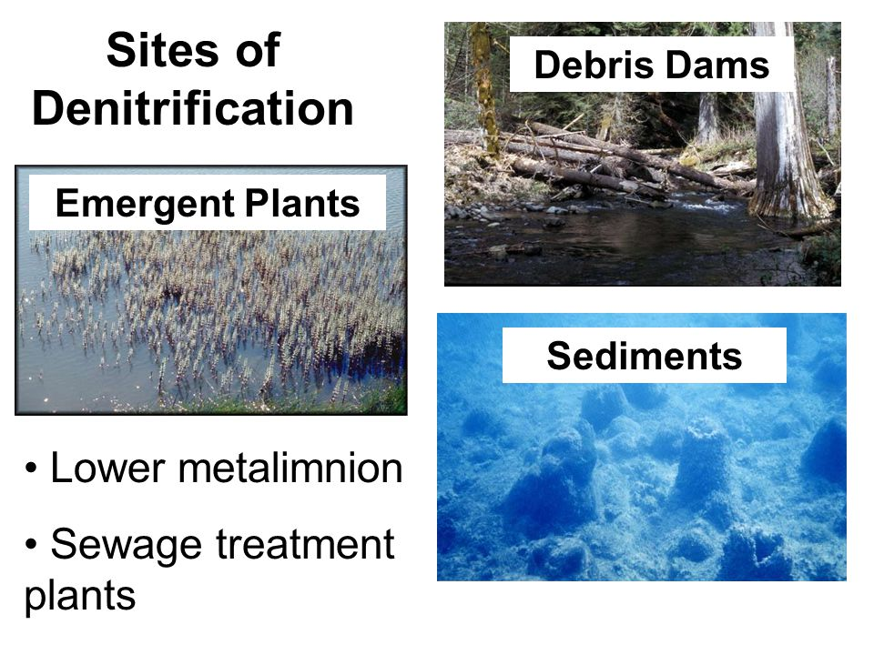 Sites of Denitrification Debris Dams Sediments Emergent Plants Lower metalimnion Sewage treatment plants