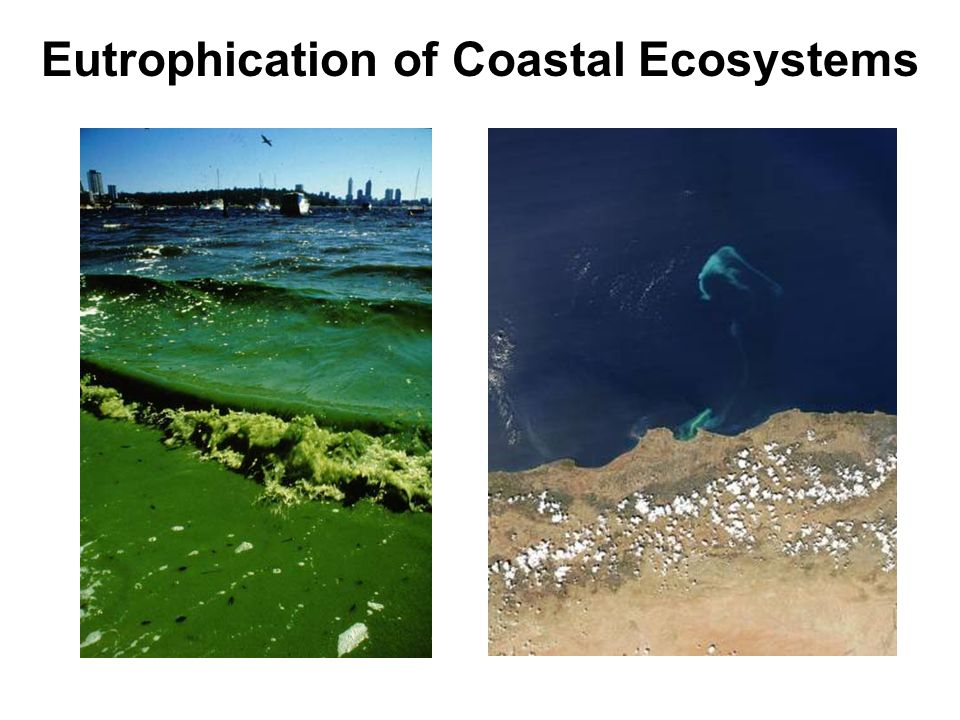 Eutrophication of Coastal Ecosystems