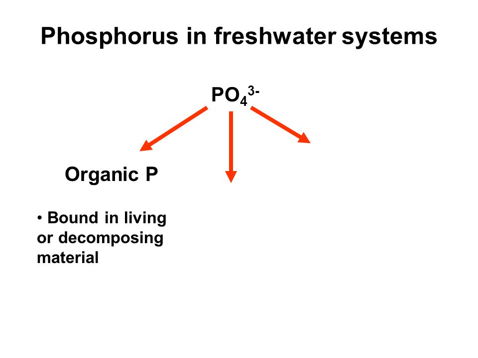 PO 4 3- Organic P Bound in living or decomposing material Phosphorus in freshwater systems