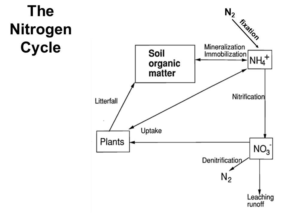 Eutrophication of Coastal Ecosystems