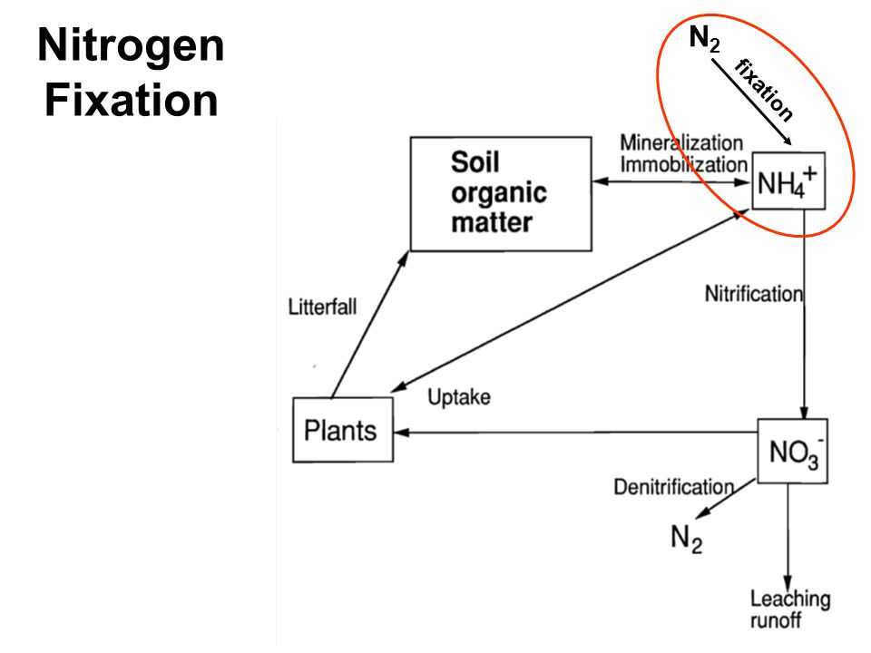 Controls on P-exchange between sediment and water Decomposition by anaerobic bacteria and turbulence at mud-water interface.
