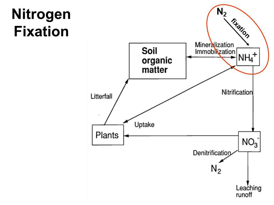 N2N2 fixation Nitrogen Fixation