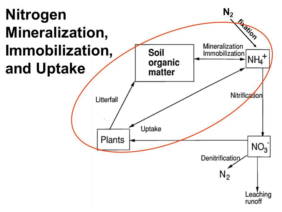 N2N2 fixation Nitrification