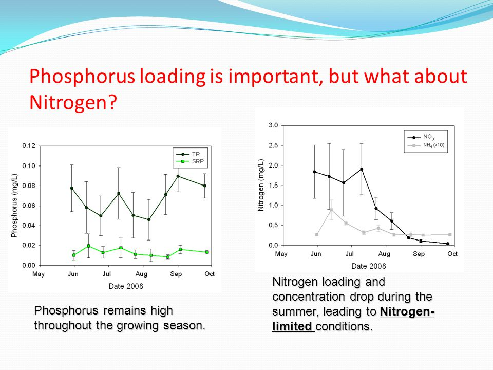 Phosphorus loading is important, but what about Nitrogen.