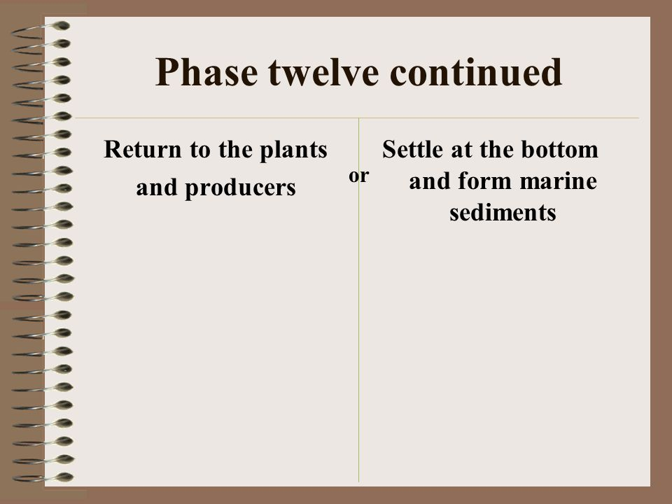 Phase twelve continued Return to the plants and producers Settle at the bottom and form marine sediments or