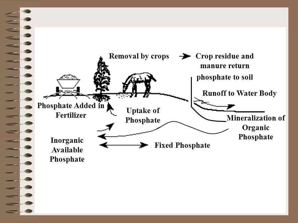Inorganic Available Phosphate Uptake of Phosphate Crop residue and manure return phosphate to soil Phosphate Added in Fertilizer Removal by crops Runo