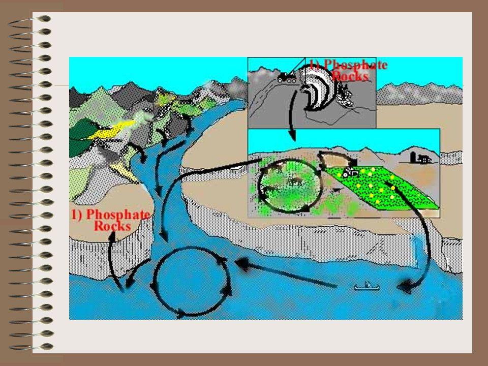 Bibliography 1.http://soils1.cses.vt.edu/ch/biol_4684/Cycles/Pcycle.htmlhttp://soils1.cses.vt.edu/ch/biol_4684/Cycles/Pcycle.html 2.http://www.lenntech.com/phosphorus-cycle.htmhttp://www.lenntech.com/phosphorus-cycle.htm 3.http://www.cst.cmich.edu/centers/mwrc/phosphorus%20c ycle.htmhttp://www.cst.cmich.edu/centers/mwrc/phosphorus%20c ycle.htm 4.http://www.specialedprep.net/MSAT%20SCIENCE/Cycl eP.htmhttp://www.specialedprep.net/MSAT%20SCIENCE/Cycl eP.htm 5.http://gsa.confex.com/gsa/2002AM/finalprogram/abstract _40198.htmhttp://gsa.confex.com/gsa/2002AM/finalprogram/abstract _40198.htm 6.http://www.elmhurst.edu/~chm/vchembook/308phosphor us.html http://www.elmhurst.edu/~chm/vchembook/308phosphor us.html 7.http://www.cnr.berkeley.edu/benninglab/Students/David/ casa/P.htmlhttp://www.cnr.berkeley.edu/benninglab/Students/David/ casa/P.html