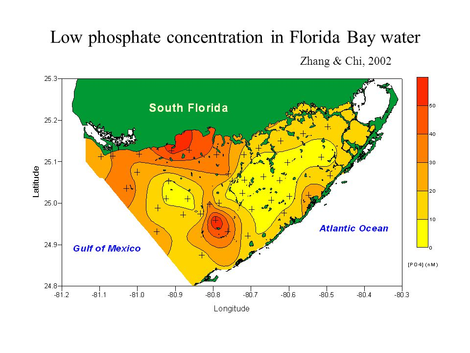 Low phosphate concentration in Florida Bay water Zhang & Chi, 2002