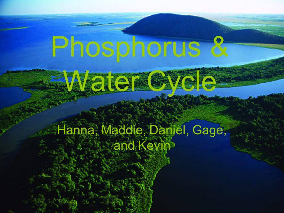 Phosphorus & Water Cycle Hanna, Maddie, Daniel, Gage, and Kevin