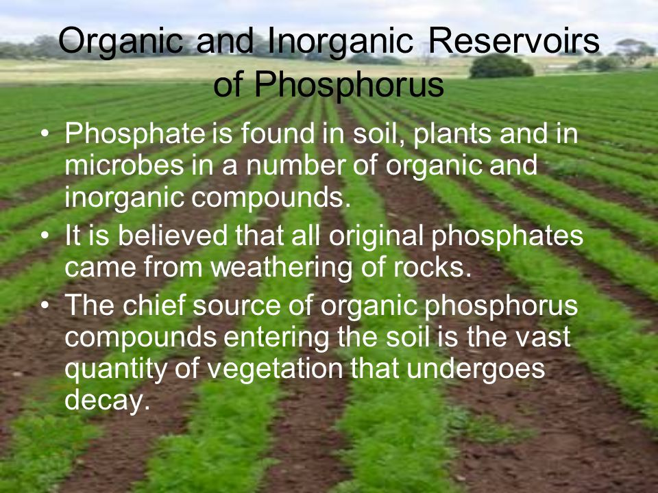 Organic and Inorganic Reservoirs of Phosphorus Phosphate is found in soil, plants and in microbes in a number of organic and inorganic compounds.
