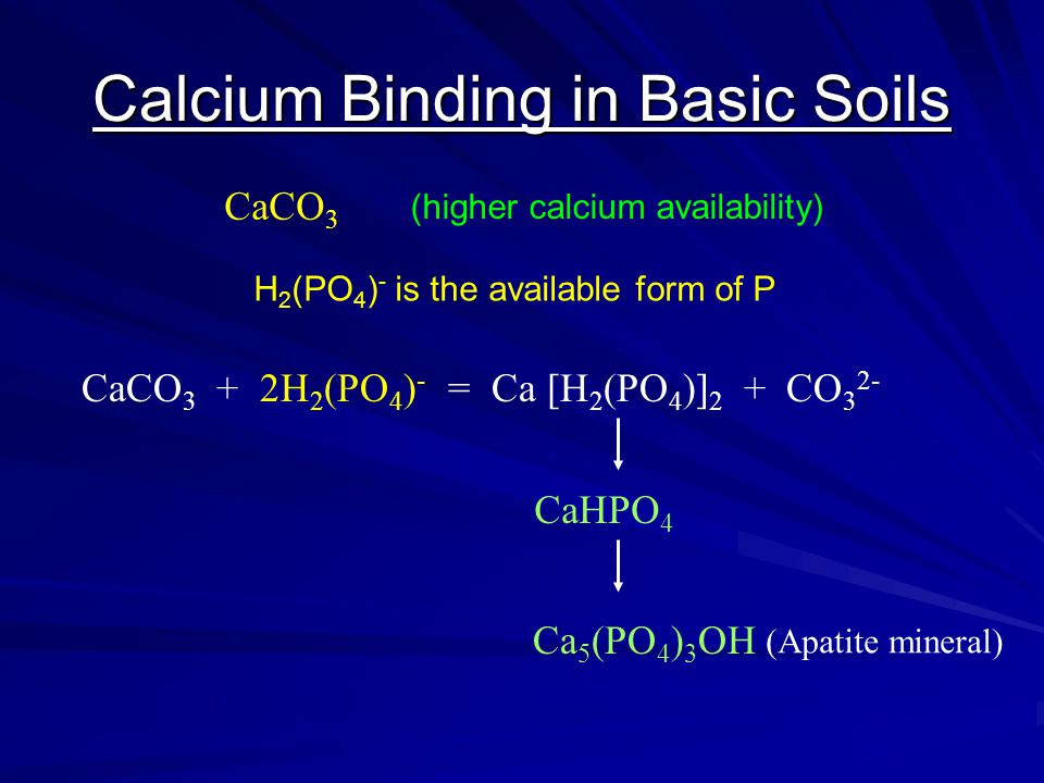 Calcium Binding in Basic Soils CaCO 3 CaCO 3 + 2H 2 (PO 4 ) - = Ca [H 2 (PO 4 )] 2 + CO 3 2- CaHPO 4 Ca 5 (PO 4 ) 3 OH (Apatite mineral) (higher calci