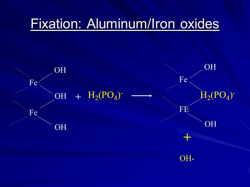 Fixation: Aluminum/Iron oxides Fe OH H 2 (PO 4 ) - + Fe FE OH H 2 (PO 4 ) - OH- +