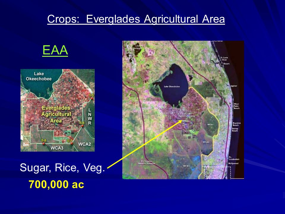 Sugar, Rice, Veg. 700,000 ac EAA Crops: Everglades Agricultural Area