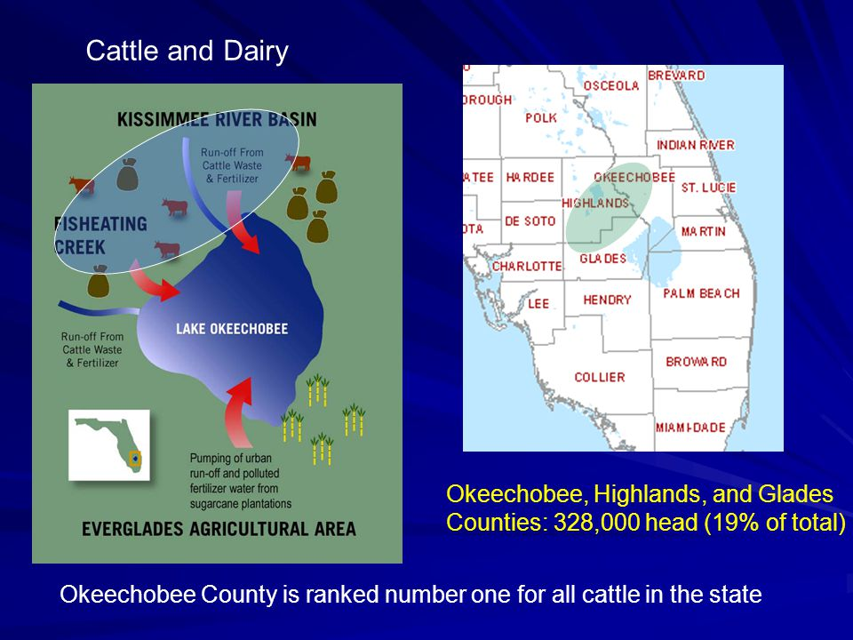 Cattle and Dairy Okeechobee, Highlands, and Glades Counties: 328,000 head (19% of total) Okeechobee County is ranked number one for all cattle in the